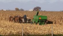 Amish 4