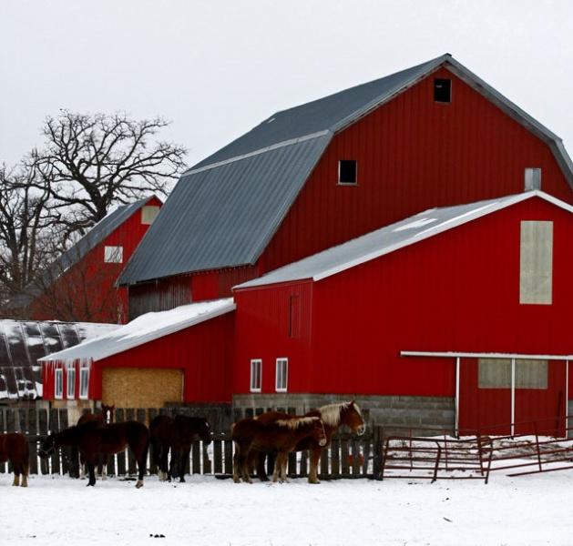 Hazleton-Barn & horses.jpg