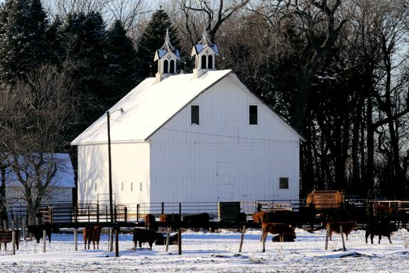 Holstein Farm.jpg