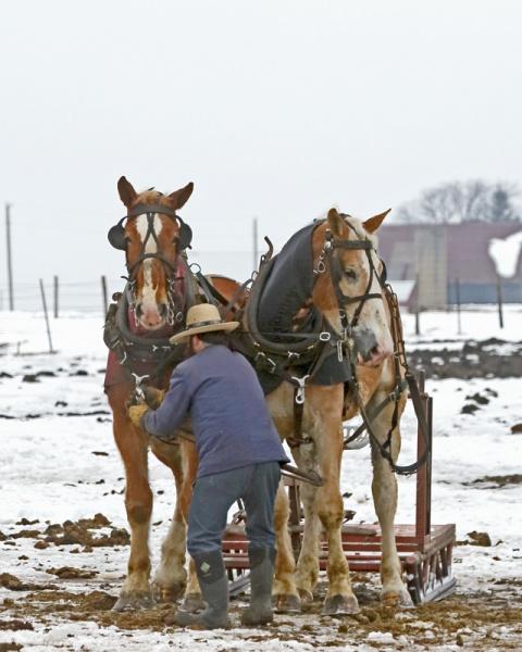 Amish Sled-8939L.jpg