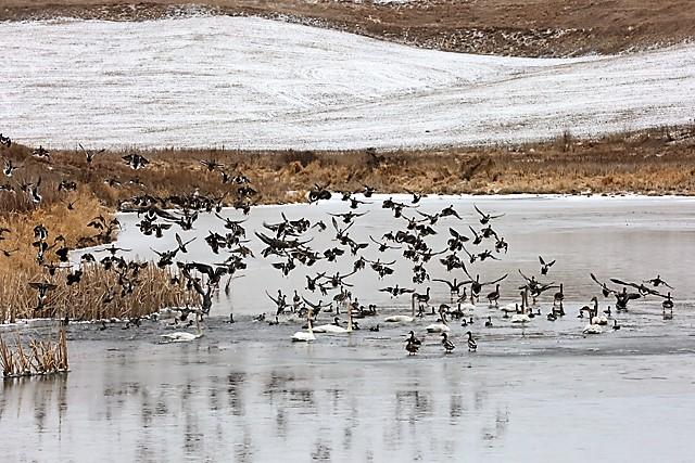 Spring Migration 1.jpg
