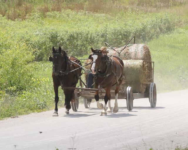 Moving Hay Bales-4311L (3).jpg