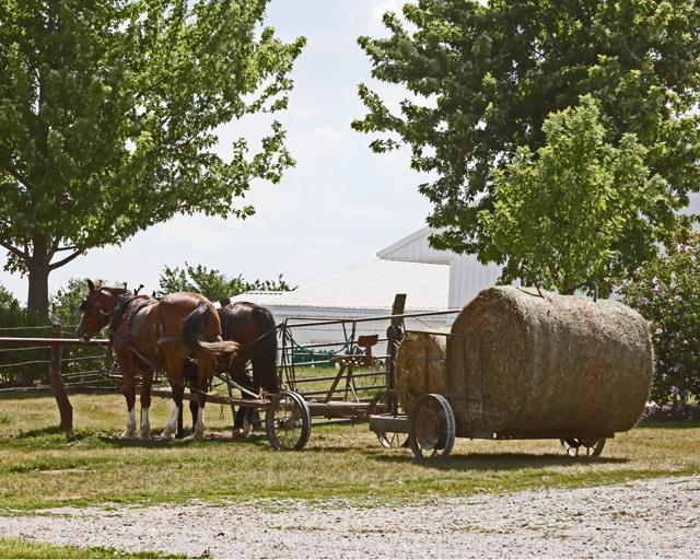 Load of Hay Bales-4318L (3).jpg