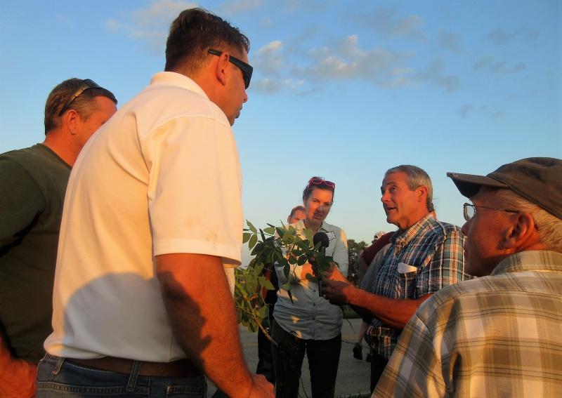 Examining a soybean plant's development.JPG