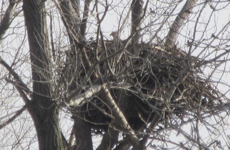 Eagle nest.JPG
