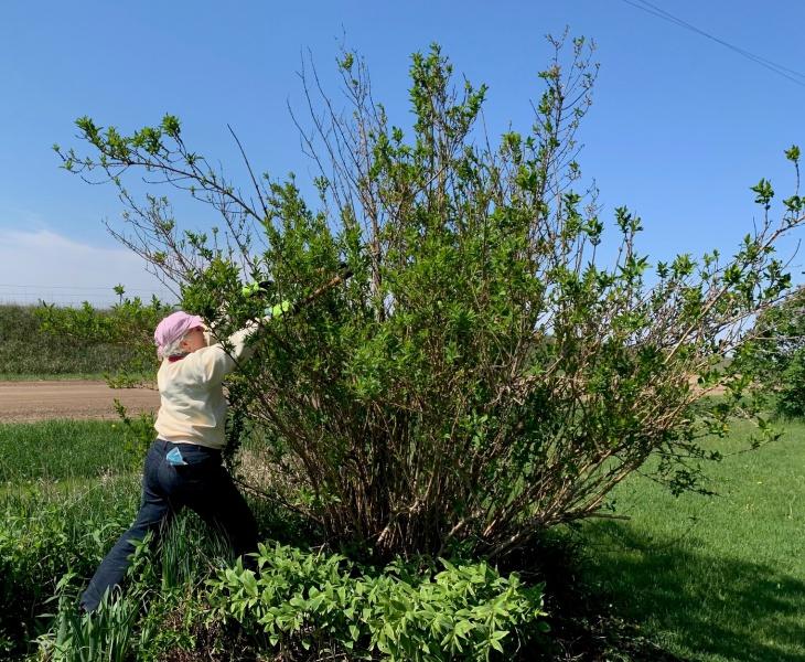 Mary Riche attacking big bush.jpeg