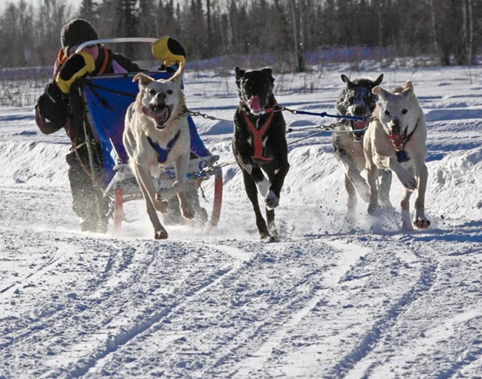 Dog sled racing 2.jpg