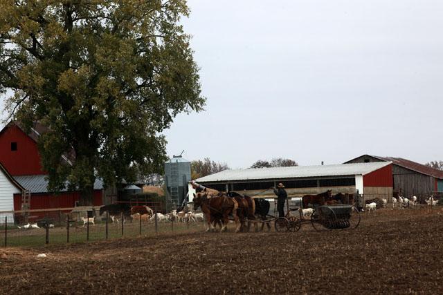 5 Amish Fall Seeding.jpg