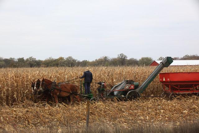 corn picker machine