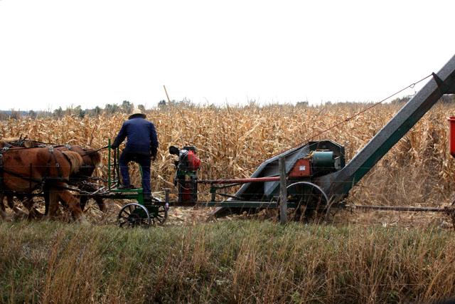 2 Amish One Row Corn Picker.jpg