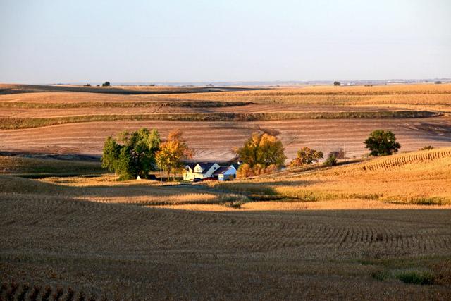 Harvest 5.jpg