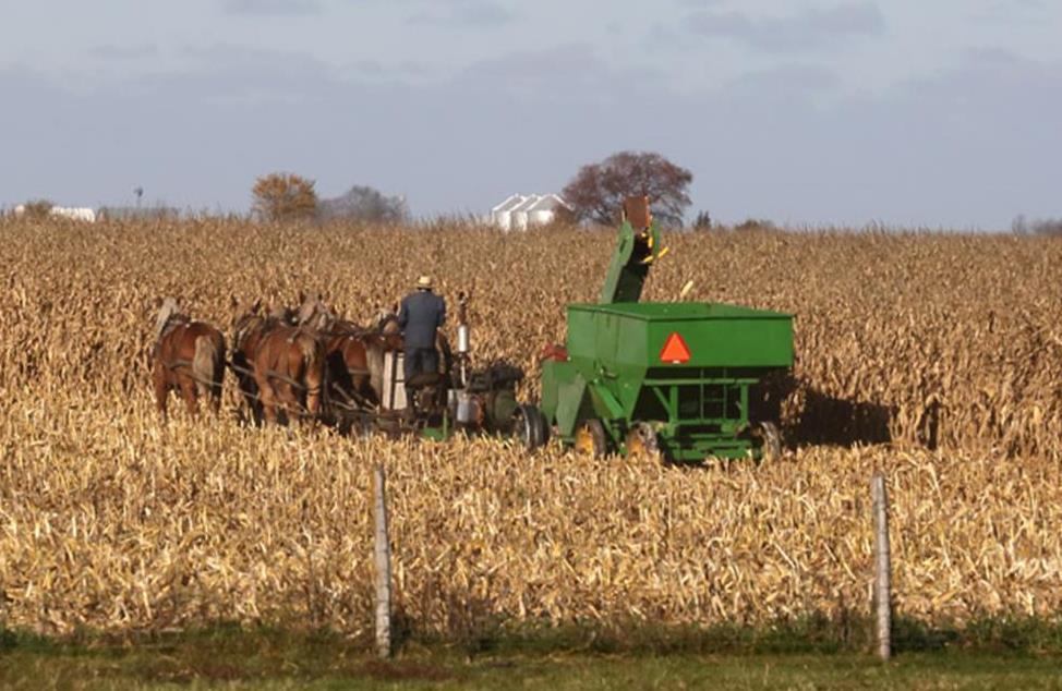 Amish 4.jpg
