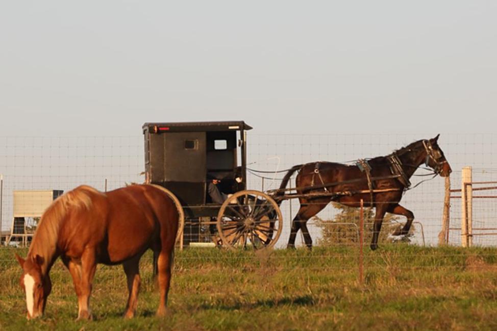 Amish 2.jpg