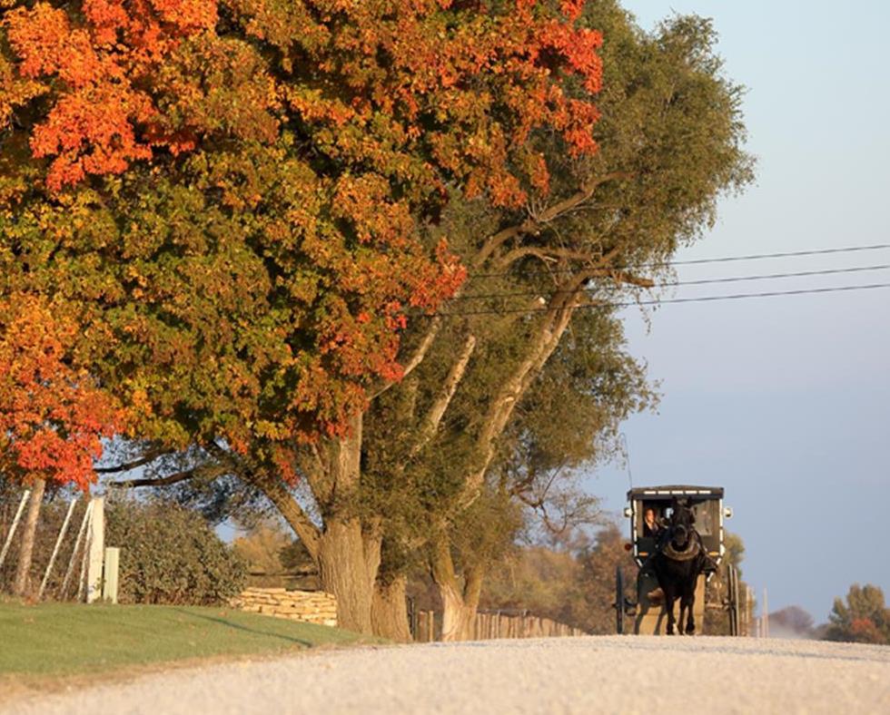 Amish 1.jpg