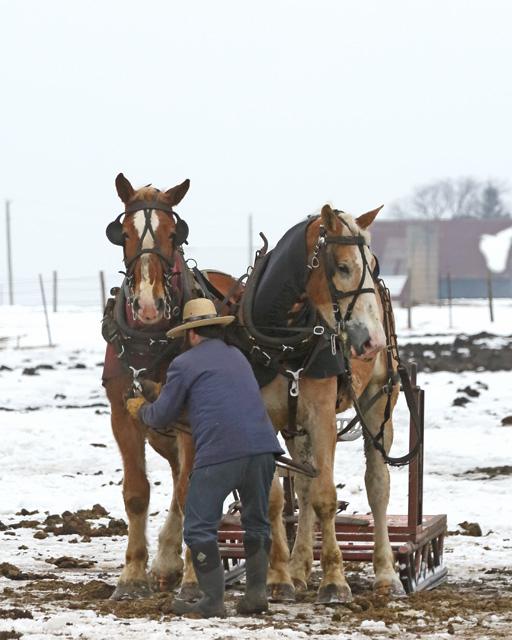 7 Amish sled 2.jpg