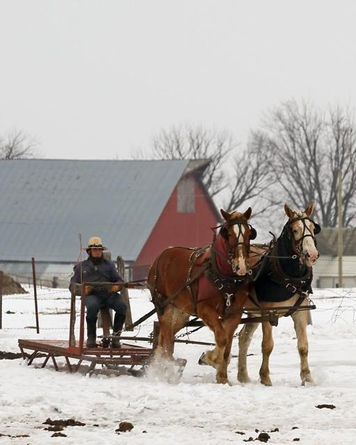 6 Amish sled 1.jpg