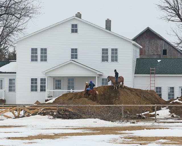 3 Amish horse play.jpg
