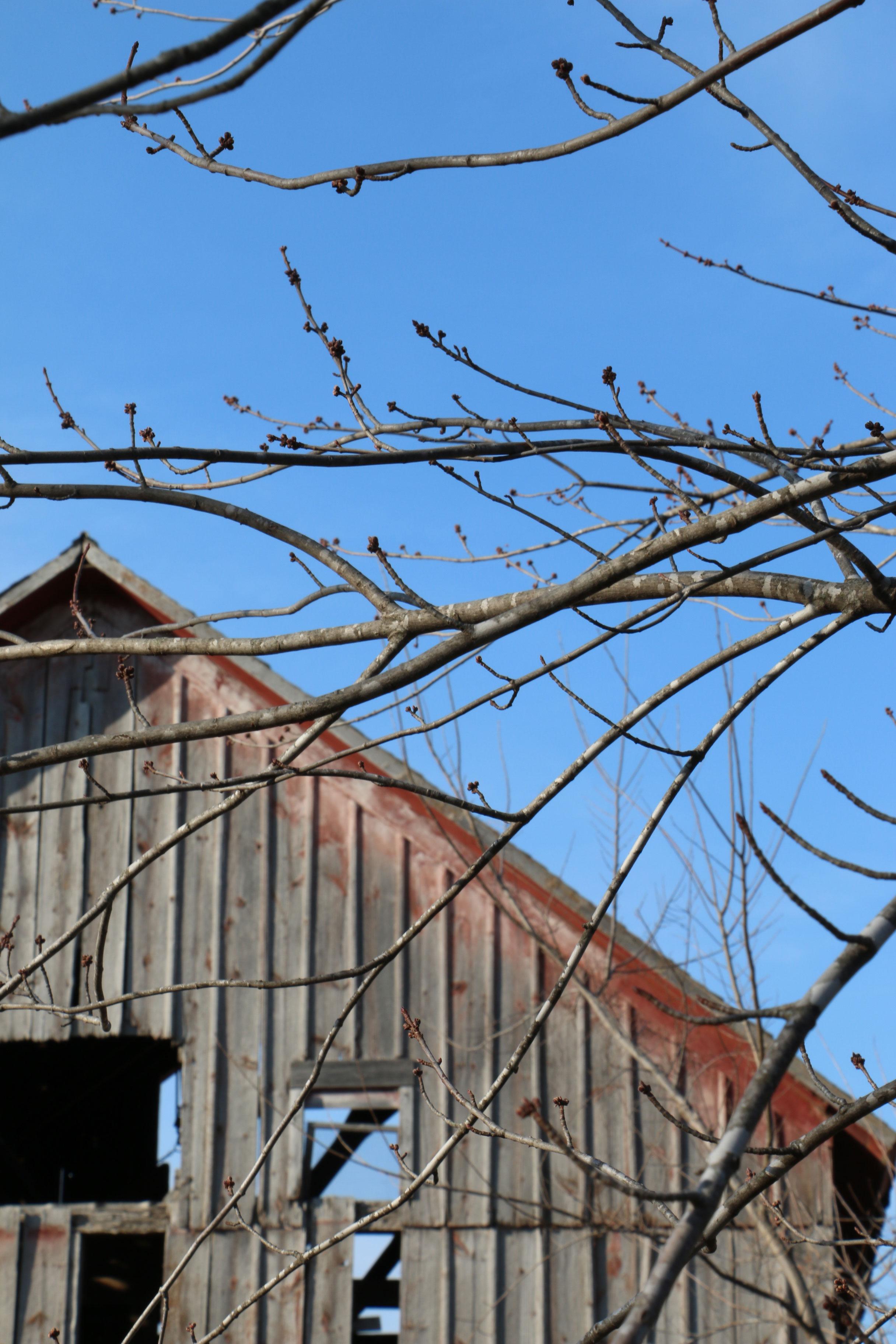 2---Spring-at-Simple-Serenity.jpg