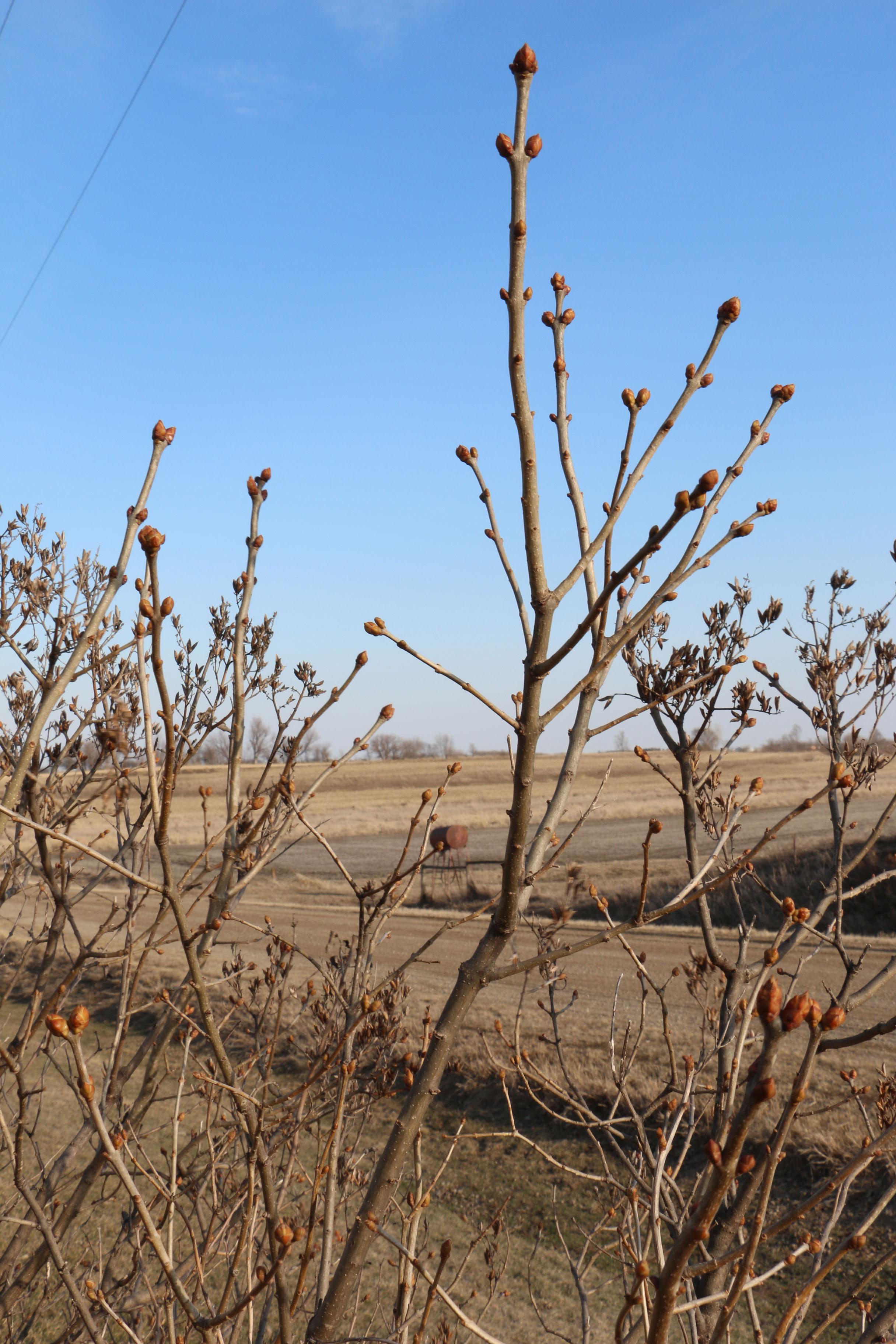 4---Spring-at-Simple-Serenity.jpg