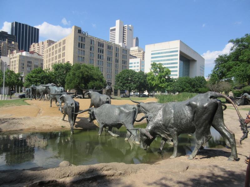 Cattle crossing the creek.JPG