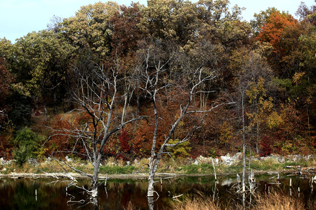 Brushy Creek 1.jpg