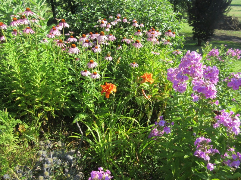 Colorful garden mix.JPG