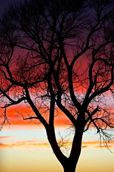 Sunset Beauty-7224L.jpg