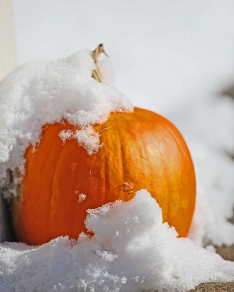 Pumpkin & Snow-6854L.jpg