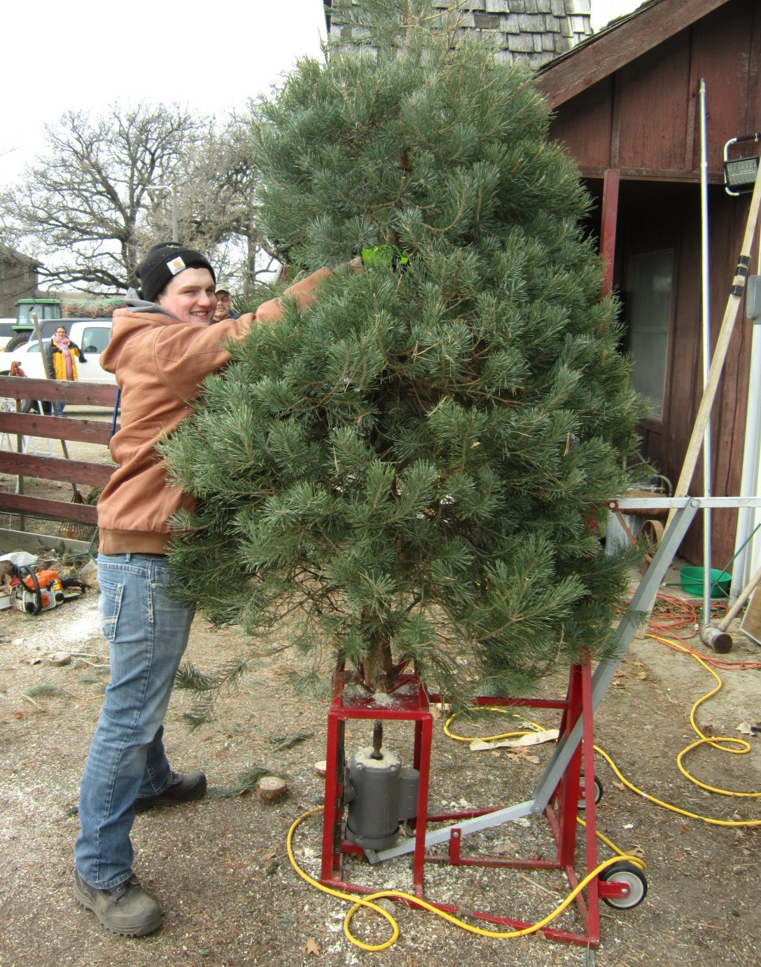 6 Camron Routh steadies tree for drilling.JPG