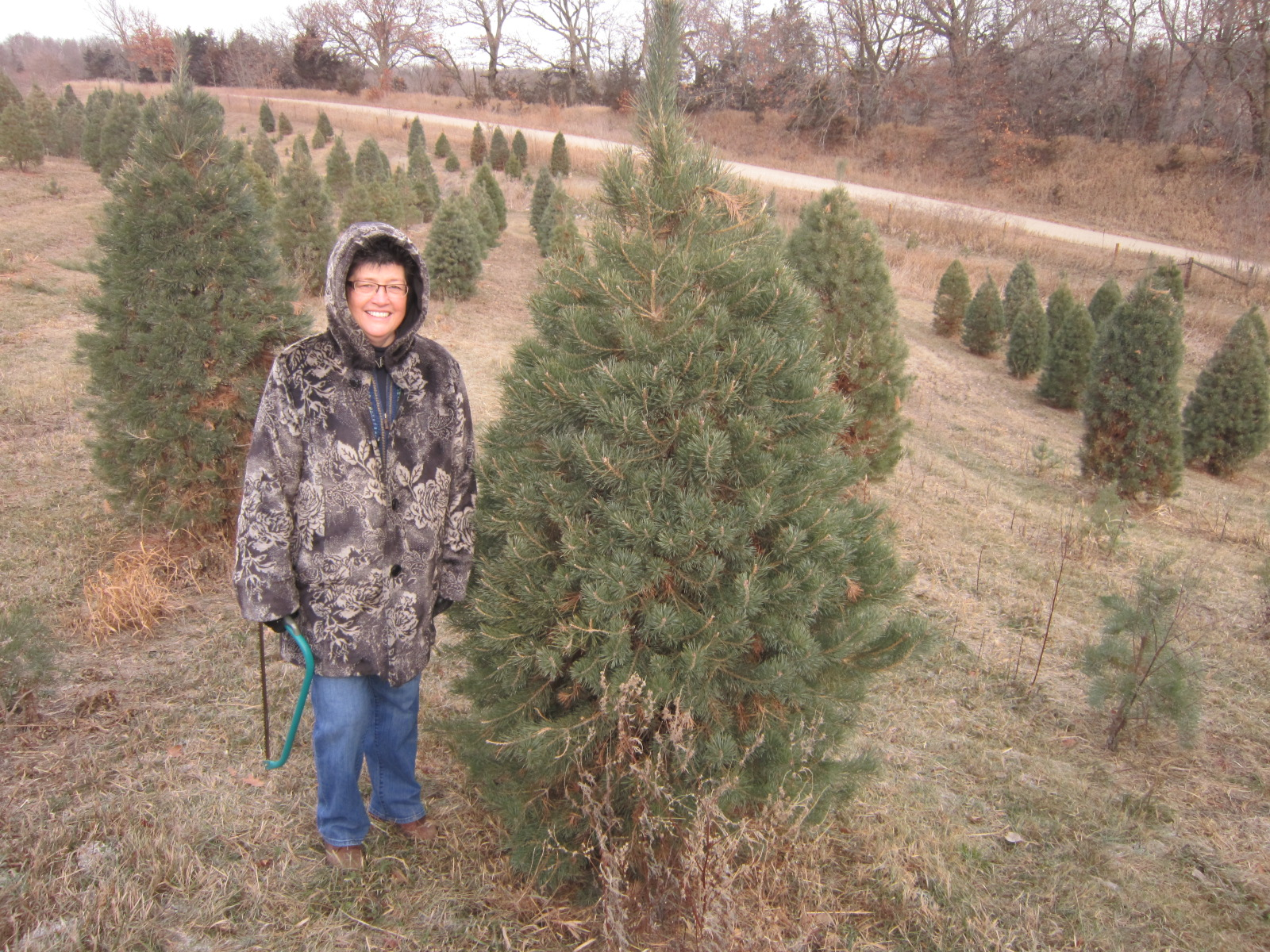 1 Carla picks out tree.JPG